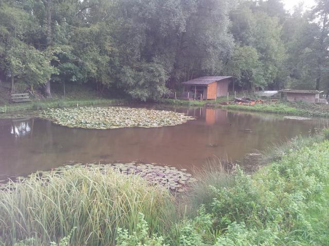 Meine fischzucht for Graskarpfen teich